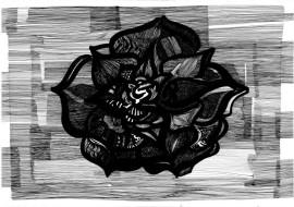Black rose, 2016/17, 100×70cm